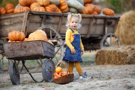 Adorable little girl alone outdoors near a pile of big ripe, orange pumpkins. The child is enjoying the harvest festival at the pumpkin patch. Halloween and Thanksgiving is a fun time for the family. October autumn harvest, preparation for Halloween.