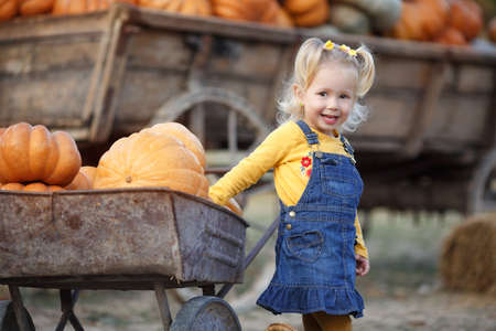 Child picking pumpkins at pumpkin patch. Little toddler girl playing among squash at farm market. Family time at Thanksgiving and Halloween. Little girl having fun on a tour of a pumpkin farm at autumn. Child sitting on largest pumpkin.