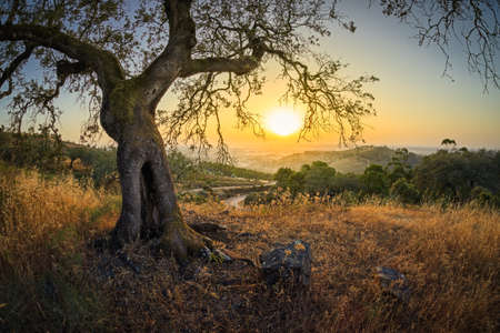 olive tree in the foreground with a road in the background crossing the fields and green mountains with a bit of fog on the horizon at sunset