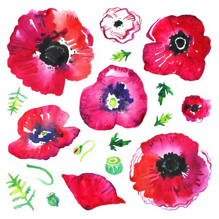 Poppy flowers and leaves. Hand drawn watercolor sketch illustration set isolated on white background 版權商用圖片