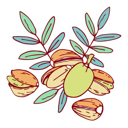 Composition with pistachio nuts and leaves. Hand drawn outline vector sketch illustration. Color on white background Illustration