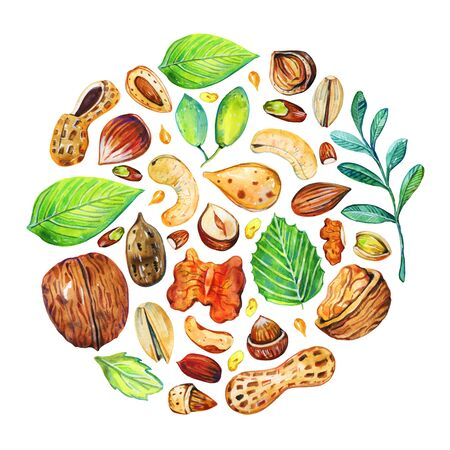 Round composition with different nuts and leaves. Hand drawn watercolor illustration on white background
