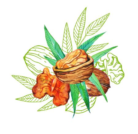 Composition with hand drawn watercolor and outline graphic walnuts and leaves. Illustration on white background