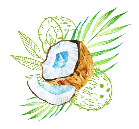 Composition with coconuts and leaves. Hand drawn watercolor illustration an doutline graphic on white background