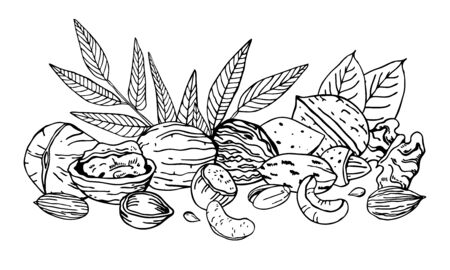 Heap of different nuts and leaves. Walnuts, hazelnuts, almond, cashew. Hand drawn vector sketch illustration. Black on white background