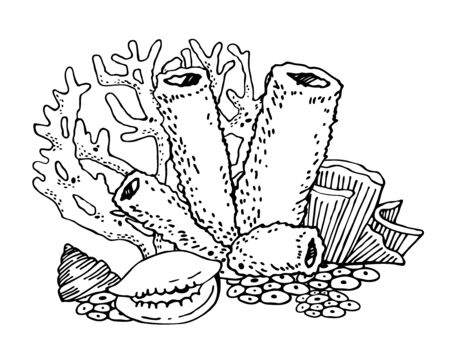 Group of corals and shells. Vector outline sketch illustration on white background