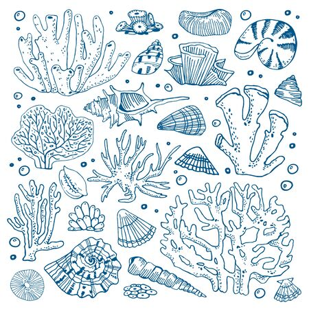 Set of corals and seashells. Hand drawn outline vector sketch illustration on white background