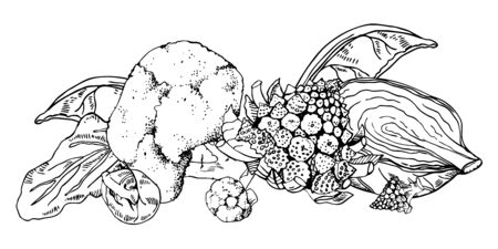 Group of different cabbages. Hand drawn vector sketch illustration on white background. Broccoli, romanesco, white cabbage