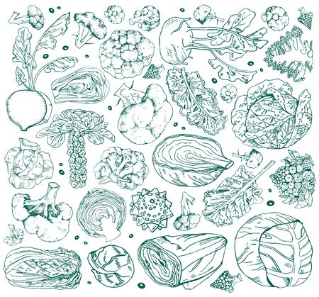 Set of different cabbage. Hand drawn vector outline sketch illustration isolated on white background. broccoli, napa, romanesco, kale, brussels sprout, kohlrabi, white cabbage Ilustração