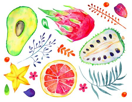 Exotic fruits and decorative flowers. Citrus, avocado, pitahaya, carambola, annona. Hand drawn watercolor set isolated on white background