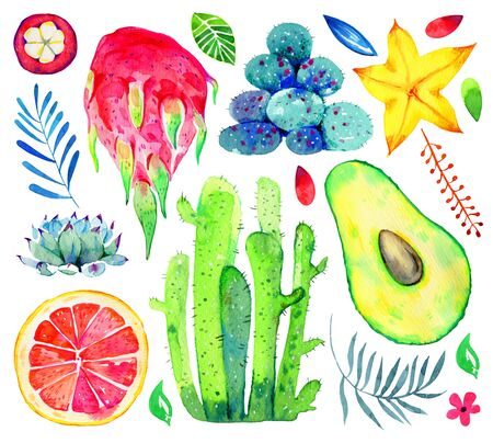 Exotic fruits, succulents and decorative flowers. Avocado, pitahaya, citrus, mangosteen, carambola. Hand drawn watercolor set isolated on white background
