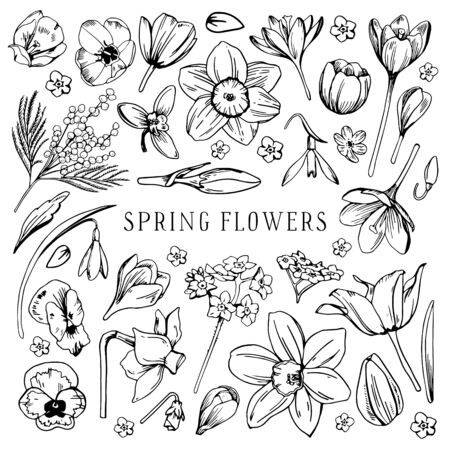 Set of different spring flowers. Tulip, narcissus, pansy, snowdrop, mimosa. Hand drawn outline vector sketch black and white illustration Illusztráció