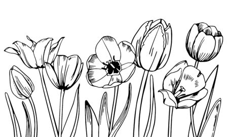 Composition with tulips in the row on the bottom of the page. Hand drawn outline vector sketch illustration Ilustração