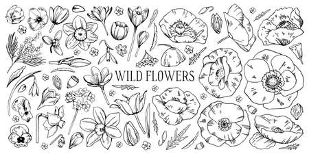 Set of different wild flowers. Tulip, narcissus, pansy, snowdrop, mimosa, poppy. Hand drawn outline vector sketch black and white illustration isolated on white background