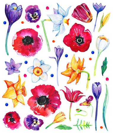 Set of watercolor wild flowers. Tulips, poppies, crocuses, narcissuses, pansies. Hand drawn sketch illustration isolated on white background