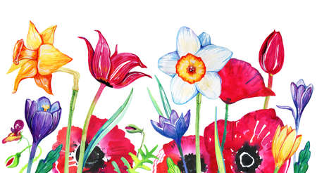 Wild flowers on the bottom of the page. Poppies, narcissuses, tulips. Hand drawn watercolor sketch illustration on white background Imagens