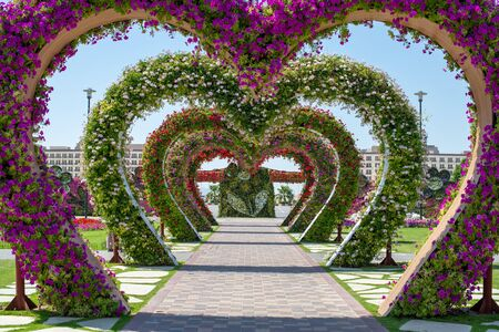 Dubai miracle garden, corridor of heart-shaped floral arches, purple, white and red flowers 版權商用圖片 - 147699179