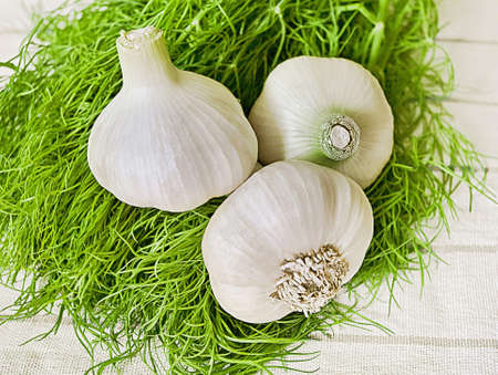 big garlic with a green dill. close-up photo