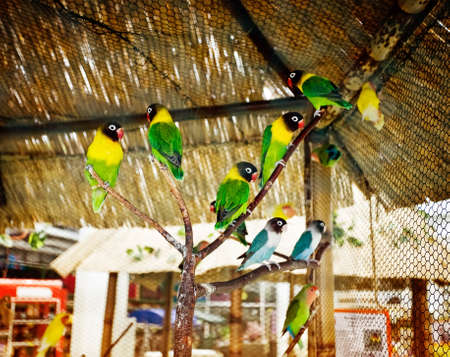 many colored parrots in a zoo. horizontal photo