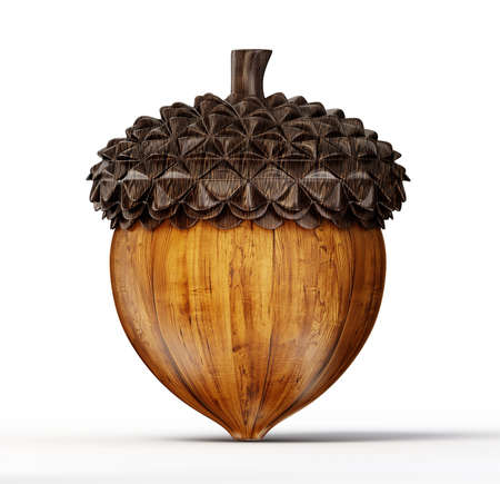 brown acorn isolated on a white background