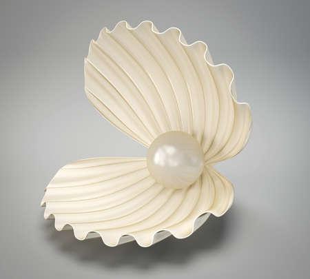 ostra: shell beautyful aislado en un fondo gris