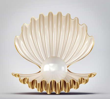 beautyful: beautyful shell isolated on a grey background