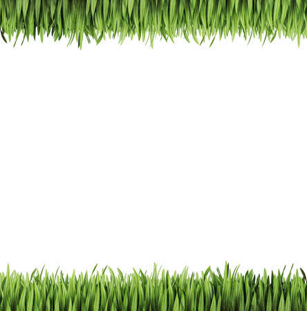 green grass on a white. 3d illustration