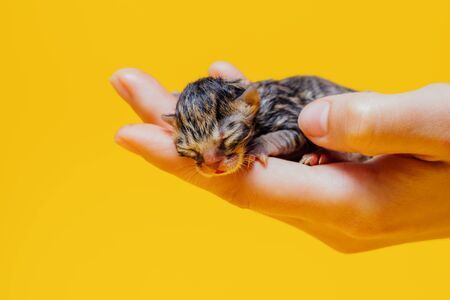 Cute striped kitten with closed eyes sleeping on palm of unrecognizable person on yellow background in studio