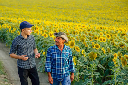 Two farmers son and father, walk near the sunflower field and I talk, family agrobusiness