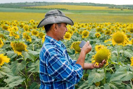farmer in the sunflower field, recording content for the lifestyle blog vlog, modern farmer using social media for marketing Stockfoto