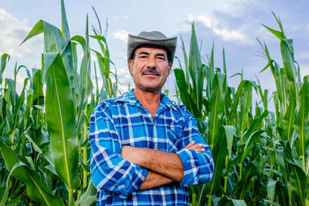 senior farmer standing in corn field examining crop at sunset, looking at camera