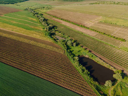 Aerial View of agricultural fields Corn Crops Field From Drone Point Of View and a small lake. Flight Above agricultural land wheat fields. Countryside agriculture field meadow landscape.