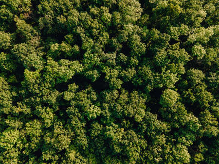 Aerial view of Amazon tropical Rainforest, Drone footage from above of Amazon jungle. cinematic images of the drone flying over the dense green forest