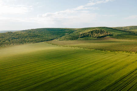 aerial view of Flying Over Beautiful Natural Wheat field. Nature Rural Landscape. Drone flying over green wheat field in spring. Technology innovation in agricultural industry. Stock Photo