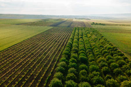 Aerial View Landscape Orchard with agricultural fields around. Flying Over Green Plantations of Fruit Trees. local fruit production, Pattern of agriculture field. Stock Photo