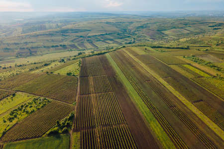 aerial view of Agricultural lands with vineyards. High quality footage. Countryside Italy, Vineyards Farmland. Italy. Aerial Vineyard Video