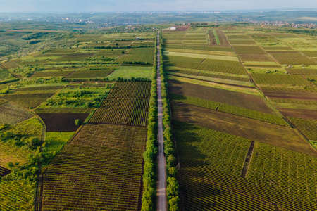 Aerial View Road Agriculture Field vineyard in Summer Day. Road on Countryside Asphalt. footage of landscape with asphalt freeway between meadow and rural field. Stock Photo