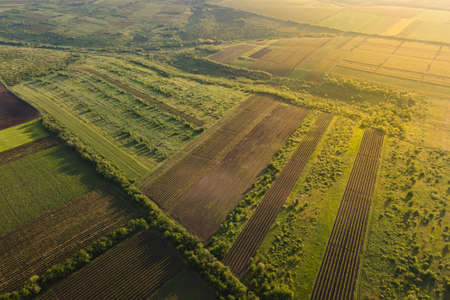 aerial view of Agricultural lands with vineyards. High quality 4k footage. Countryside Italy, Vineyards Farmland. Italy. Aerial Vineyard Video Stock Photo