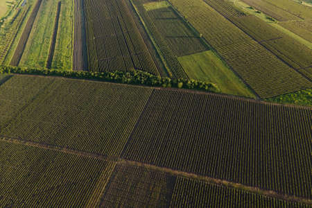 Aerial View Countryside Beautiful Farms and Vineyards Beautiful. video of drone amazing nature view all green field concept of agriculture land Stock Photo