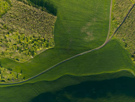 aerial view of green summer forest with green fields at Majestic sunrise, meadows. drone flying spring green forest early in the morning. Flying over green trees forest. Beauty world
