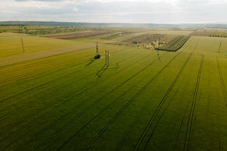 Aerial cinematic clip drone flies rising over a wheat field and High voltage electric towers. Drone flies over a green agricultural wheat field Stock Photo