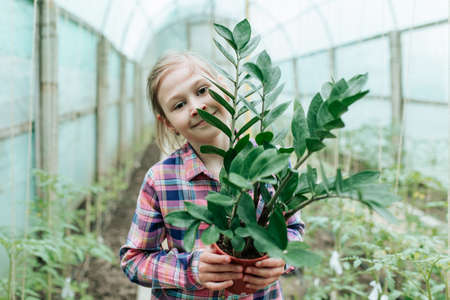 kid girl looking at camera holds a potted flower in her hand. the girl in the square shirt holds a house plant in her hand in the greenhouse