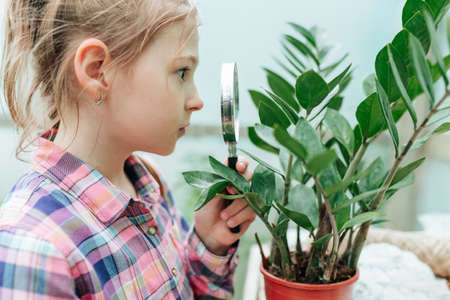 Curious child girl in greenhouse using a magnifying glass to look through, outdoors nature. Happy little girl looking through magnifying glass on a sunny day