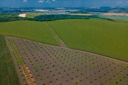 Drone flying over green field harvest crops in the countryside. aerial view agricultural industry. Agriculture in European Union from above