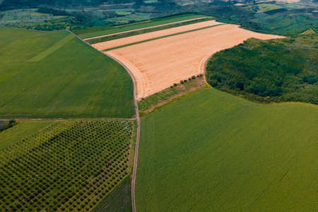 aerial view of green agricultural land with different crops. Flight Above Rural Countryside Landscape With Growing Corn Field summer day. Flight Above Cornfield. Wind Wave. Stock Photo