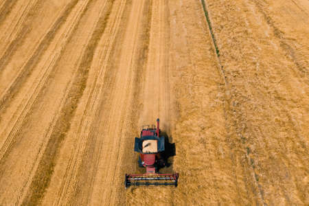 from above of agricultural combine harvests wheat in field in summer on sunny day in sunlight aerial view drone flight over modern combine harvesting wheat on the field.