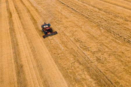 Aerial view of wheat harvest. Drone shot flying over combine harvesters working on wheat field. Harvester machine to harvest wheat field Work in process. A field after a harvest.