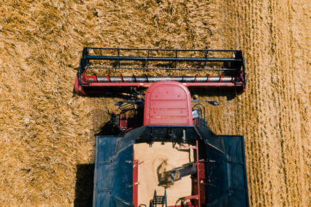 Aerial view Close up Modern combine harvester collects ripe wheat. drone flight over Combine harvester mows ripe spikelets, barley, rye. Stock Photo