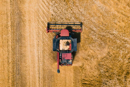 aerial view of Combine harvester agriculture machine harvesting golden ripe wheat field. Combines in the field. 4K Aerial view of harvesters.