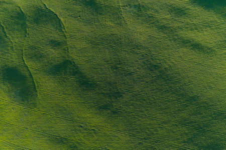 Aerial view of forest at sunrise. Drone shot flying over tree and green land. Aerial View Of Green Forest Landscape. Top View From High Attitude In Summer Evening. Stock Photo